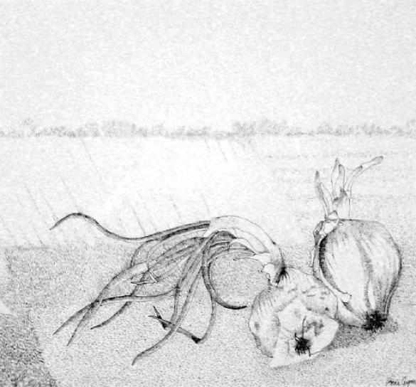 Afbeelding van het kunstwerk 'uitgelopen uien' van Anne Glynn