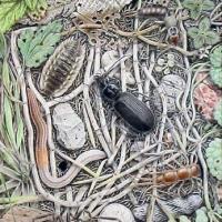 Afbeelding van het kunstwerk 'wie het kleine niet eert....' van Sjef van der Molen