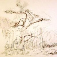 Afbeelding van het kunstwerk 'grove den' van Adriaan van Esveld