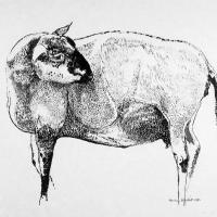Afbeelding van het kunstwerk 'geschoren schaap' van Rinny Reulink