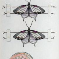 Afbeelding van het kunstwerk 'opgeplakte vlinders' van Theo Goedings