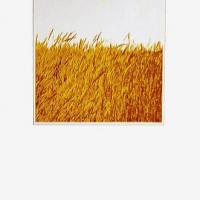 Afbeelding van het kunstwerk 'zomer' van Koos van Tol/Leen van Weelden